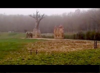 Zoos de toute une vie en captivit for Sevilla plaisance du touch